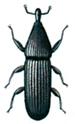 Vivel-Euophryum-confine