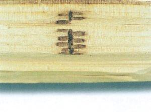 Ambrosiabaggens gångar i trä