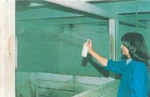Bekämpning av husfluga med spray