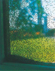 Gräsflugor kan förekomma i stort antal