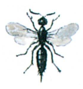 Parasitstekel