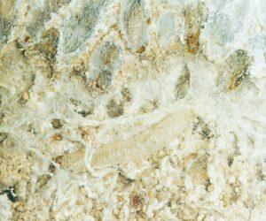 Spinntrådar från kvarnmott