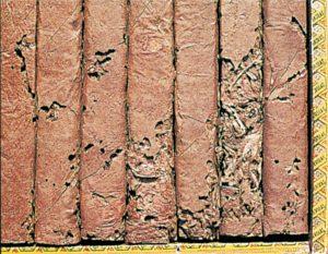 Tobaksbaggelarver i cigarrer