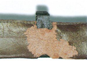 Trepunkterad skräpmalslarver gnager i läder