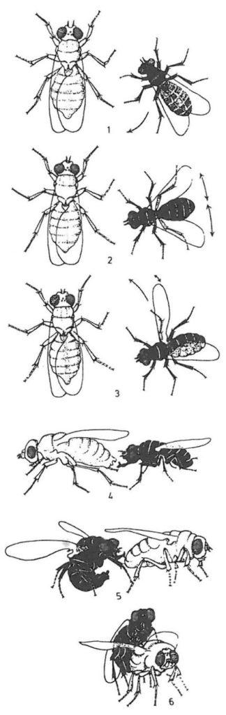 Insekters och kvalsters parningsbeteende